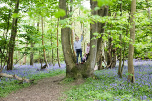 woodland-photographer-eversley-8